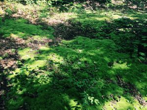 a bed of green moss along a mountain trail